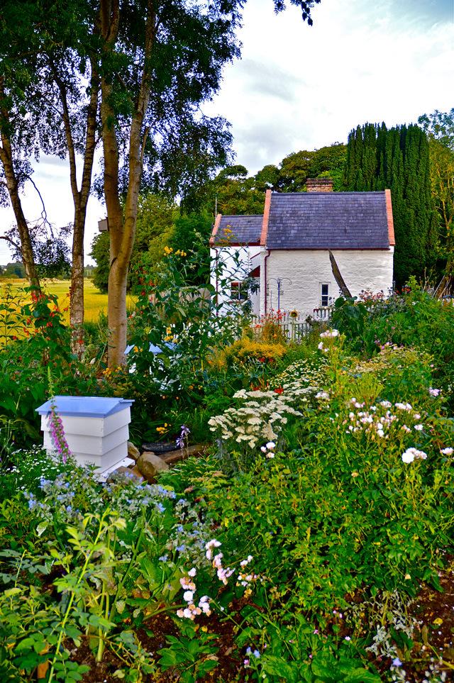 06.June-Moneypennys-Lockhoue-Bee-Garden