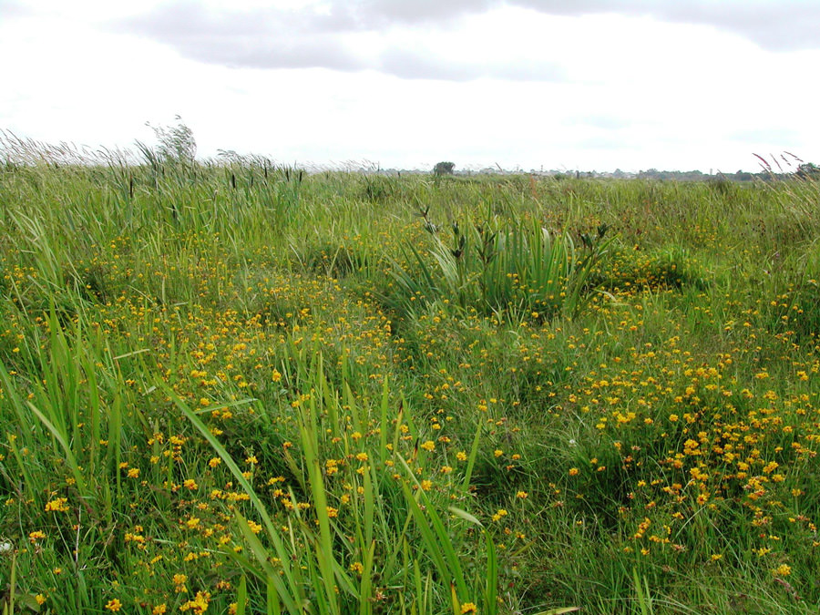 Fen-vegetation-at-Derrywaragh-Maghery-Craigavon-Borough-Council