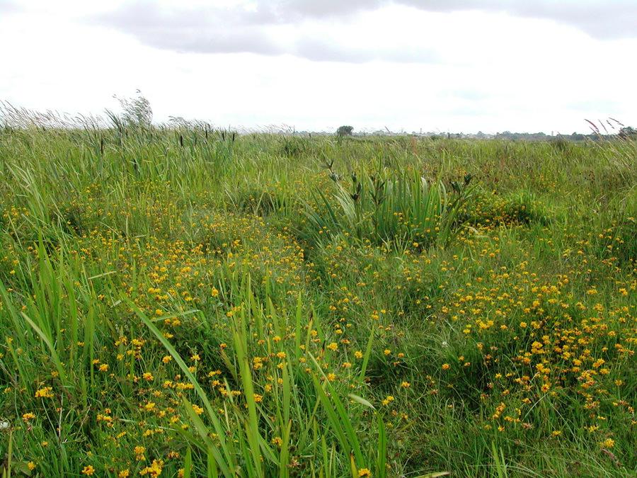 Fen-vegetation-at-Derrywaragh-Maghery-Craigavon-Borough-Council