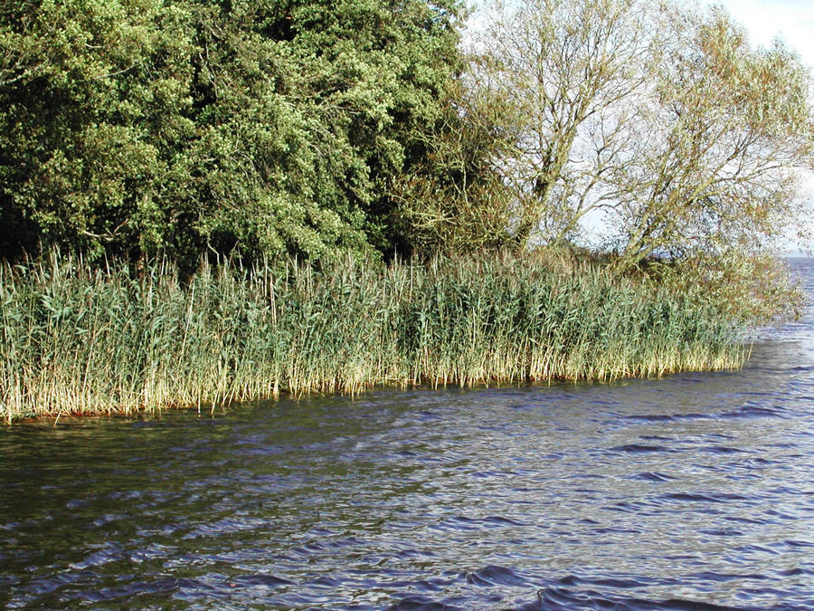 Reedbed-conservation-Service